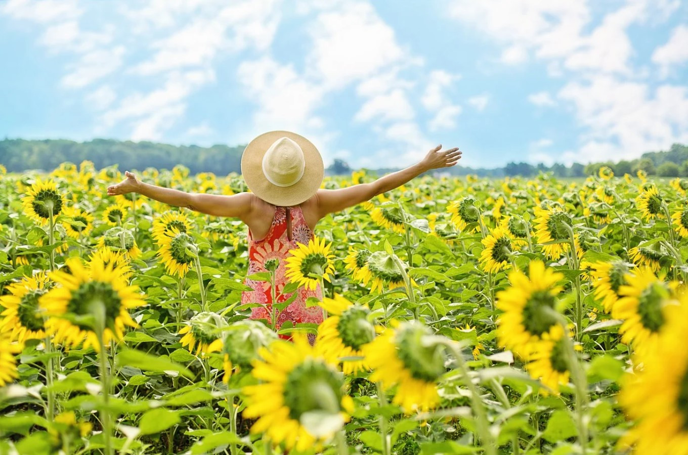 sunflower field with woman