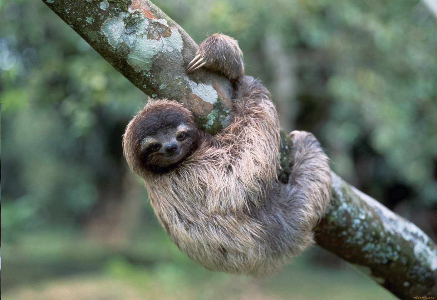 cute sloth on tree
